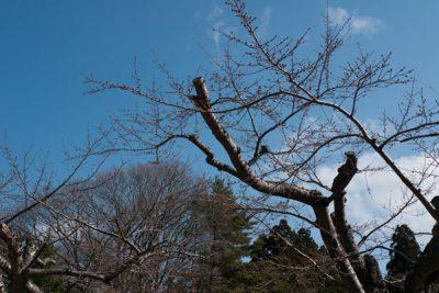 2014年度日本北海道員工旅遊